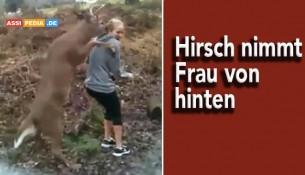Hirsch nimmt Frau von Hinten