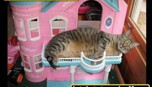 Katze frisst Barbie
